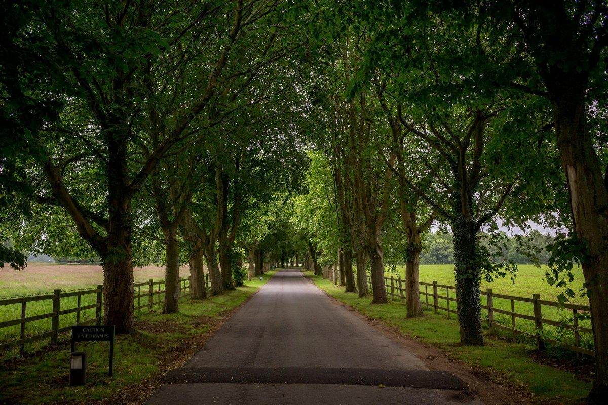 Wotton House wedding road in the woods